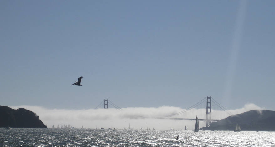 sailing charters san Francisco Bay in fog
