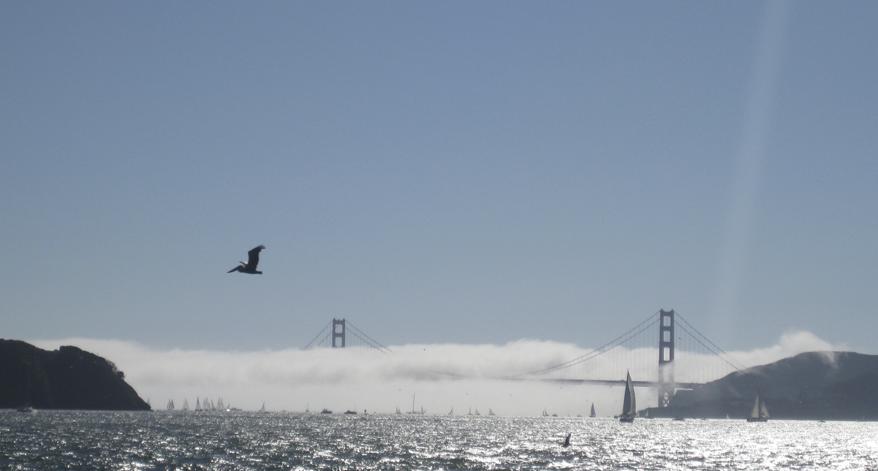 sailing charters san Francisco Bay in fog